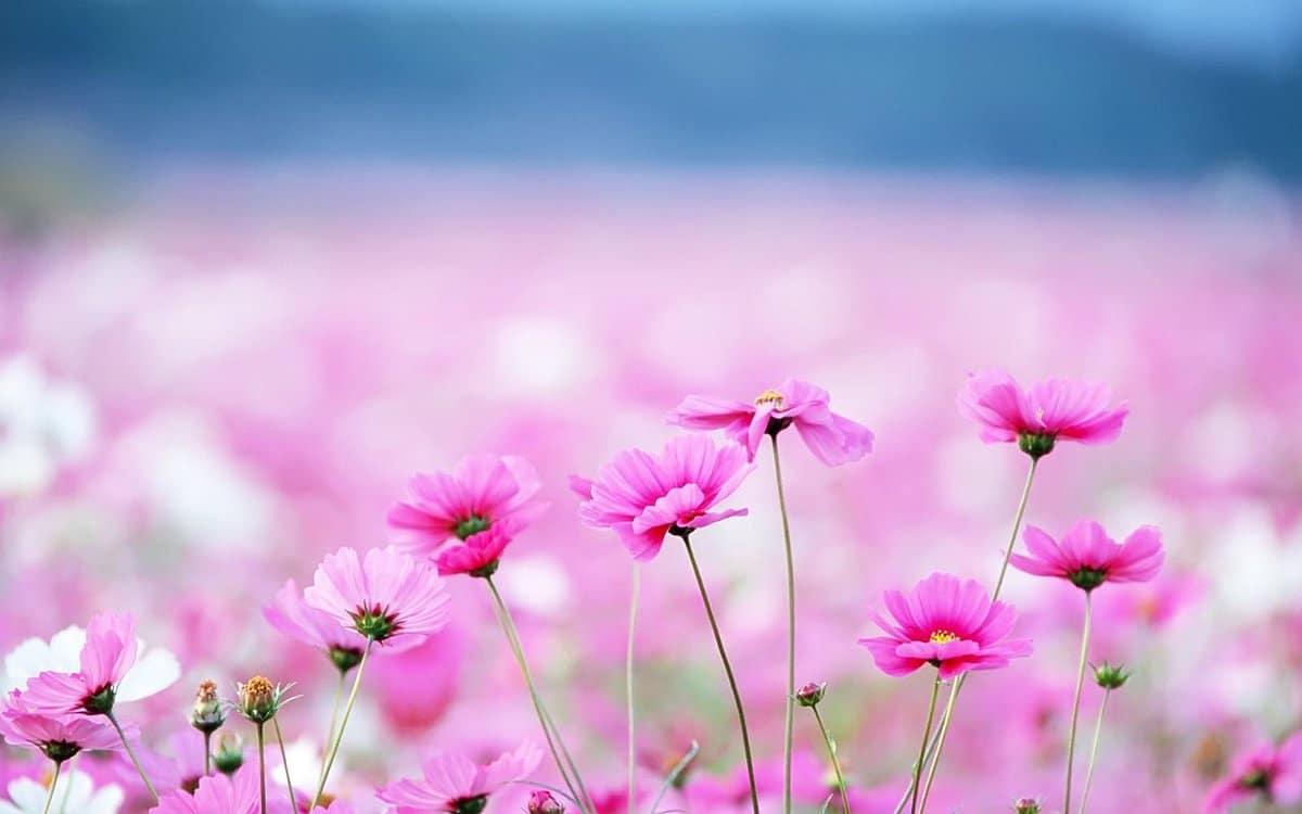 Bereavement Day flowers
