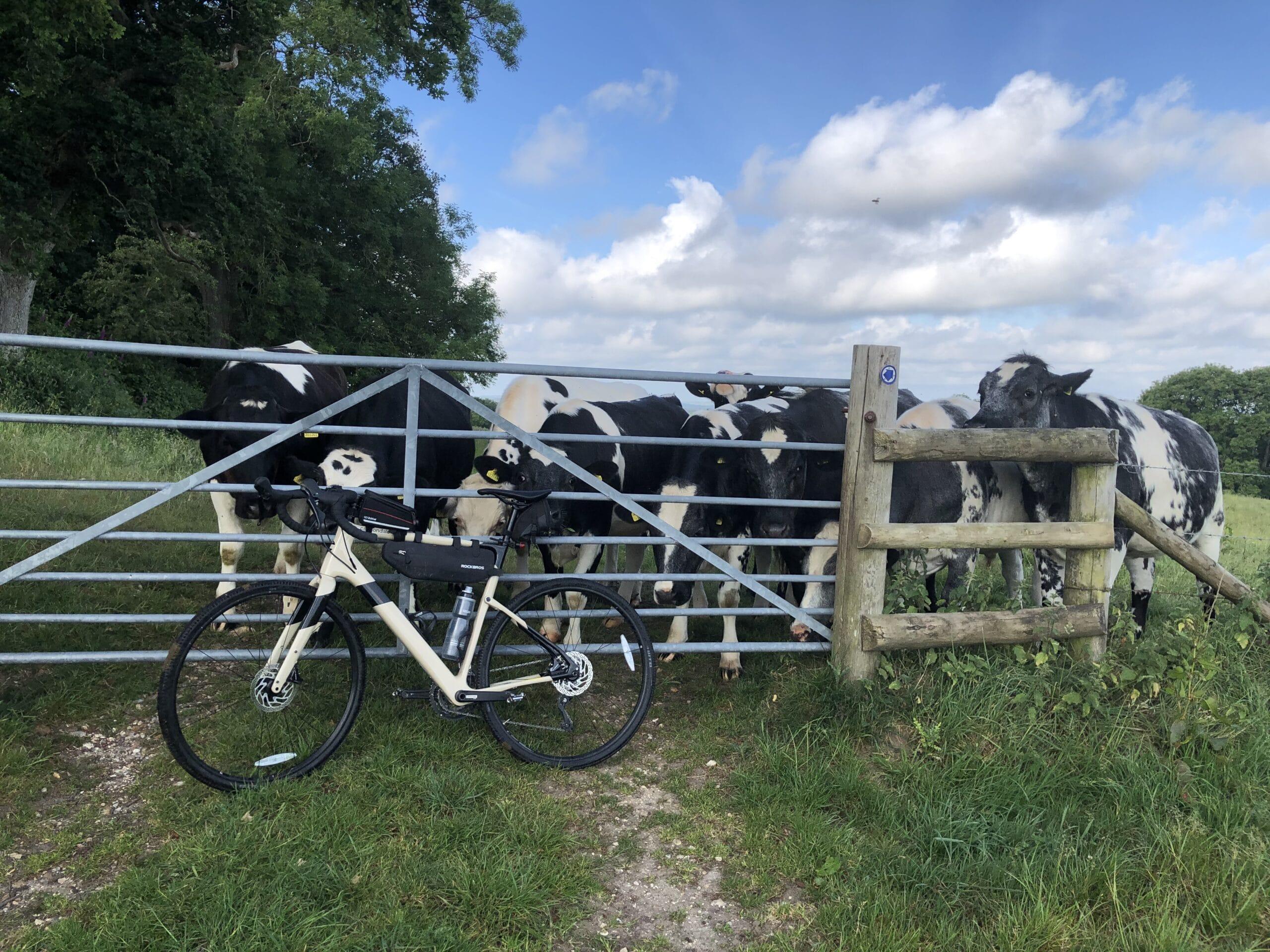 2.-COWS-CYCLING.jpg
